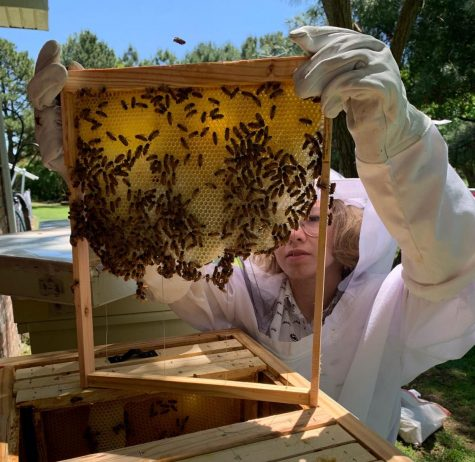 Student raises bees in backyard, potentially wins $1000